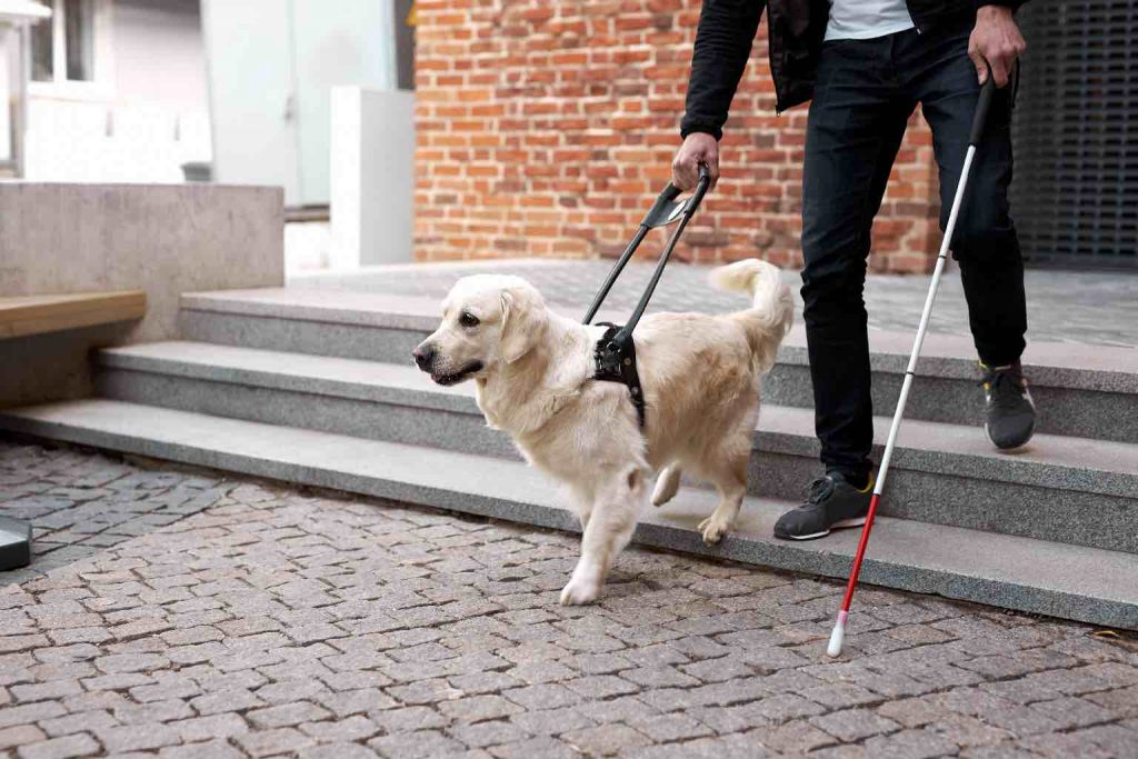 A man with a stick being guided down three steps by a dog