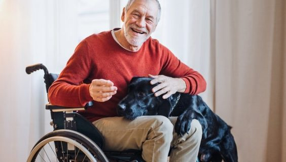 An old man in a wheelchair scratching the ear of a dog with its head on his lap